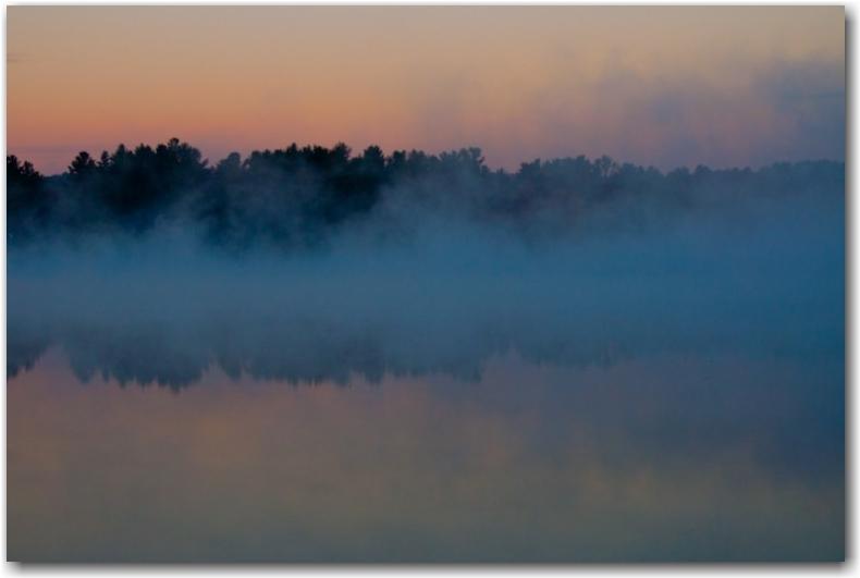 fog-tree
