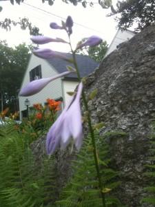 New England Flowers