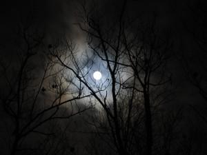 moon-oak-trees-clouds