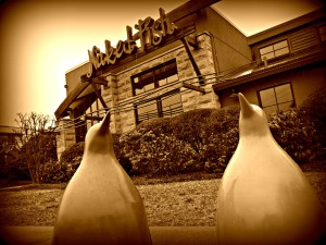 penguins_picnik