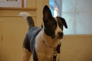 Lulu the Eyelook Optical pup