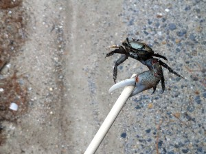 crab-on-a-stick