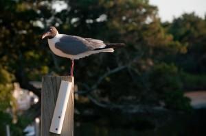 2010-07-Ocracoke-Trip-1081