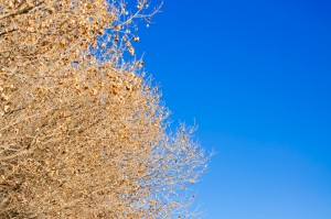 Tree, Sky
