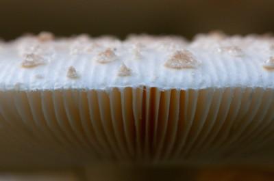 Closeup: Mushroom